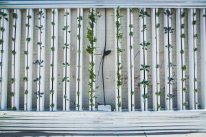 How to do Vertical Farming