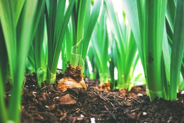 Composting Pros And Cons: Is This Effective?