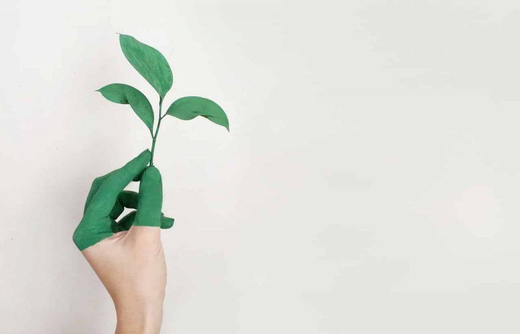 eco-friendly interior design