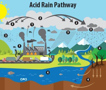 acid rain pathway