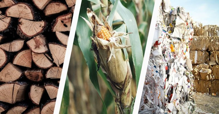 What are the Different Types of Biomass?