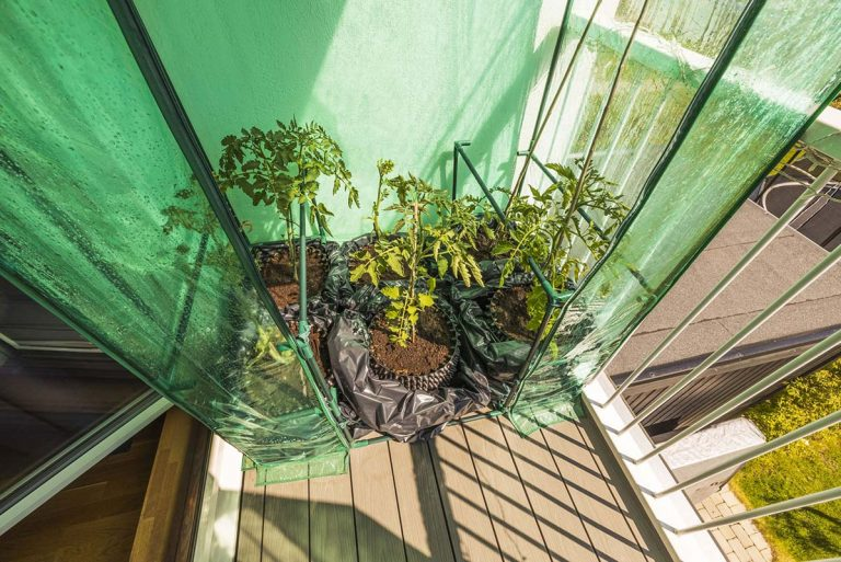 Best Small Greenhouse Kits for Your Mini Garden