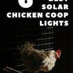 best solar chicken coop lights